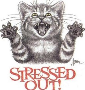 Stressed-out+cat