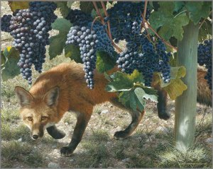 foxes-vine1