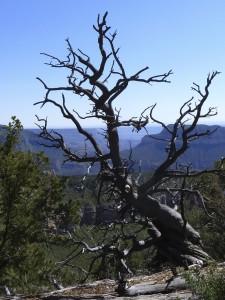 twisted tree