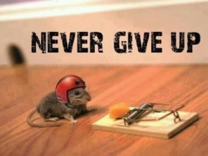 never-give-up-