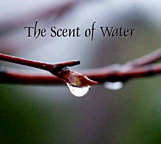 The-Scent